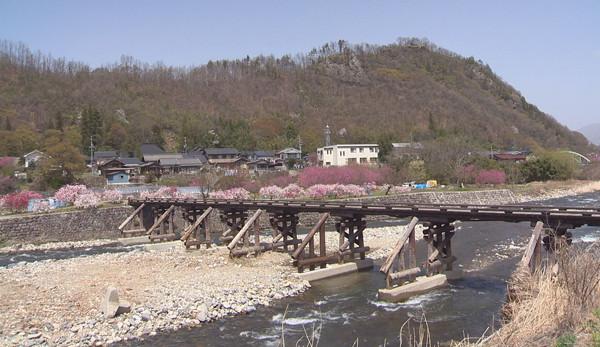 腰越の依田川に架かる馬坂橋周辺、遊歩道に咲く花桃が見ごろ