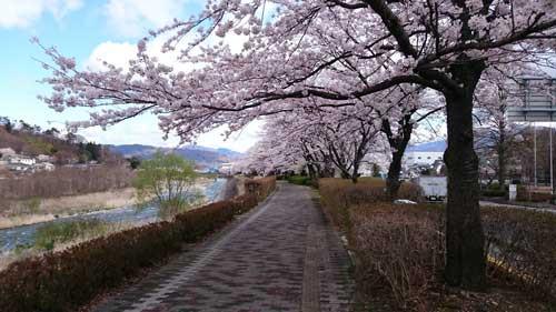 依田川の桜堤防でドローン撮影実施