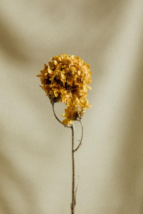 FLOWER ADICTED.jpg