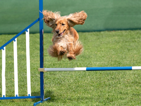 Fun dog agility course chingford london