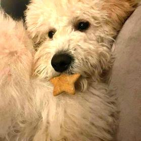 Dog 11.jpg