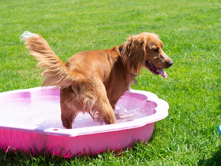 Dog Boarding and daycare in Chingford