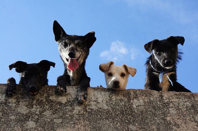 Puppys 4.jpg