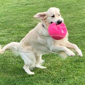 Dog 20.jpg