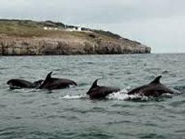 Dolphins, Moonfleet, Classic, Adventure, Tallship Sailing, Tallship Experience, Classic Sailing, Gaff Rigged