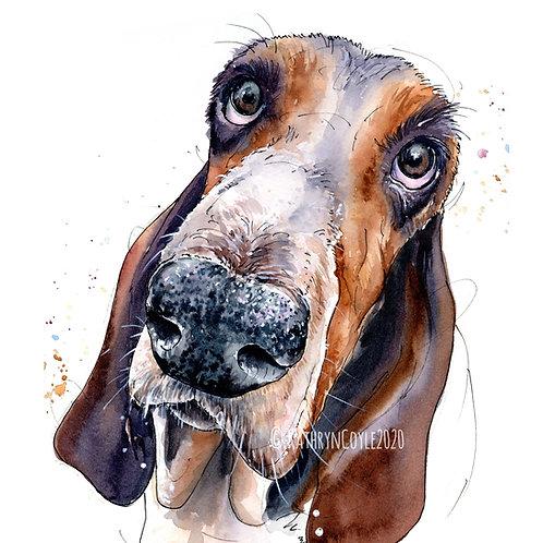 Basset Hound  Watercolour Print