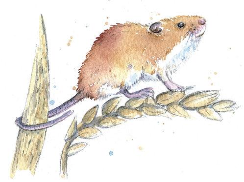 ACEO Mini Original Watercolour - Harvest Mouse