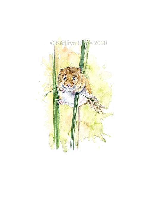 Harvest Mouse - Giclee Fine Art Print