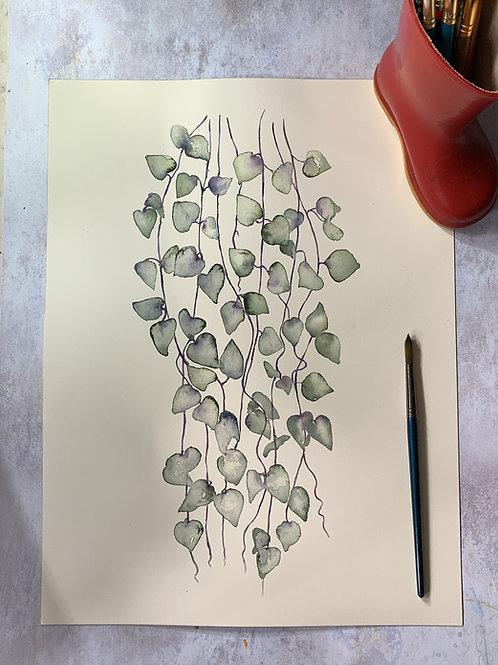 Original Watercolour - String of hearts plant