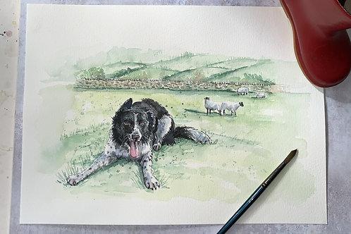 Original Watercolour -COLLIE, SHEEP DOG