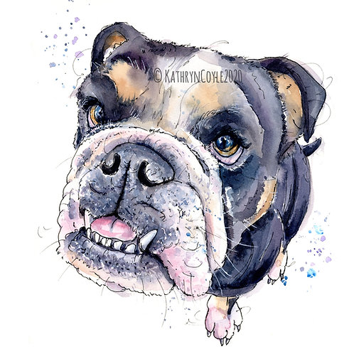 Bulldog  Watercolour Print
