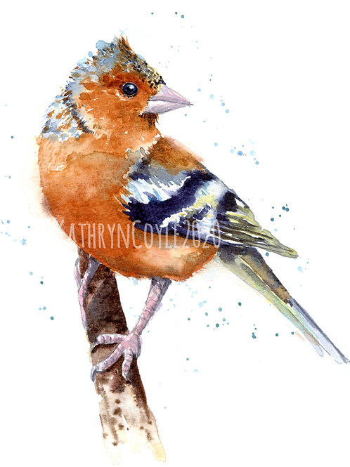 Chaffinch Watercolour Tutorial