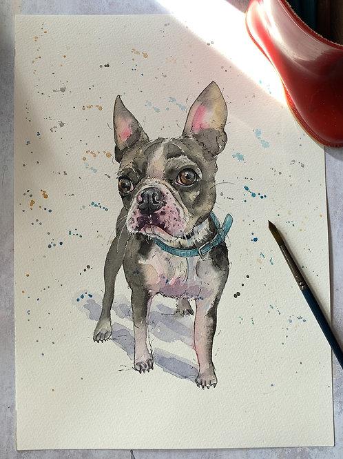 Original Watercolour -Blue Frenchie