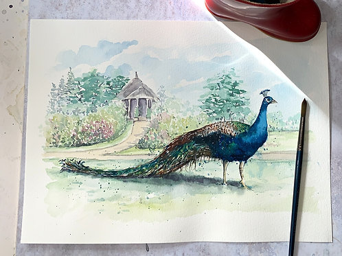 Original Watercolour -Peacock