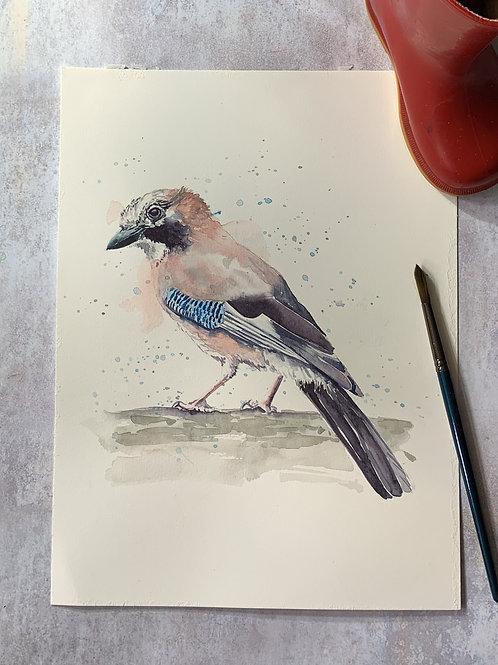 Original Watercolour - Jay
