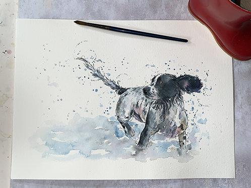 Original Watercolour - spaniel in water