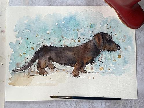 Original Watercolour -Dachshund /  Sausage Dog