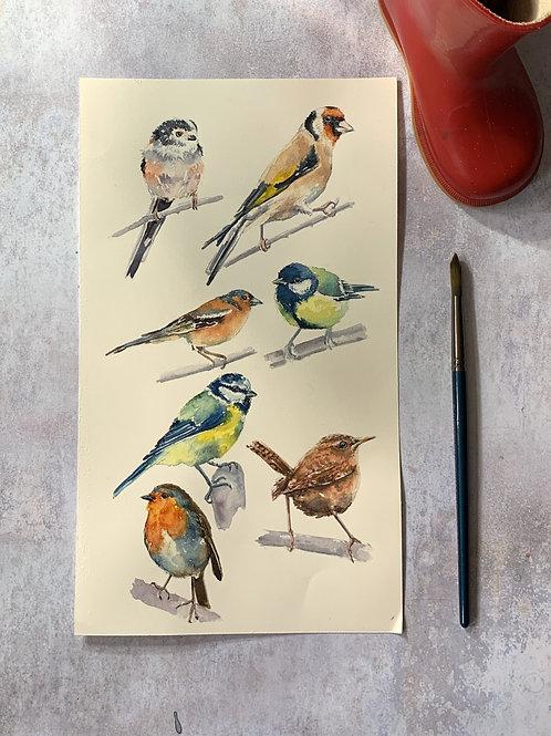 Original Watercolour - Garden Birds