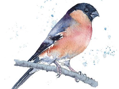 ACEO Mini Original Watercolour - Bullfinch