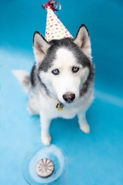 Dog Cake Smash Birthday Session Ohio