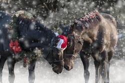 Winter Christmas Equine Photoshoot Northern Kentucky