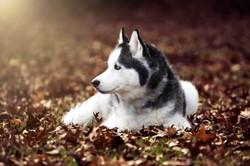 Canine Dog Winter Portrait Session Ohio