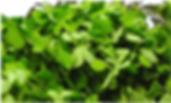 Bockshornklee gegen Falten