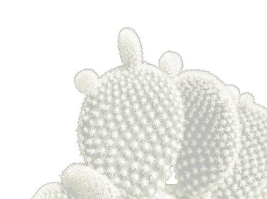 kaktus-hintergrund.png