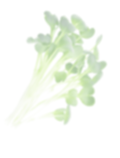 Kresse2-freigestellt-transparent-01.png