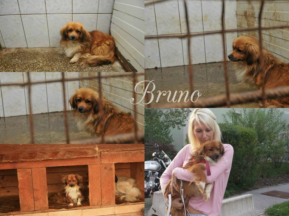 BRUNO ♥