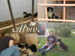 ALVIN ♥