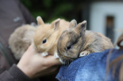 Bunny Supplies and Nutrition