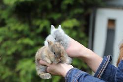 Social Dwarf Bunny Siblings