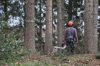 forestry-4272920_1920.jpg