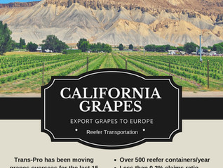 Export Grapes to Europe