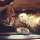 Emma Jane Floral Design tabby kitten sitting in a bag