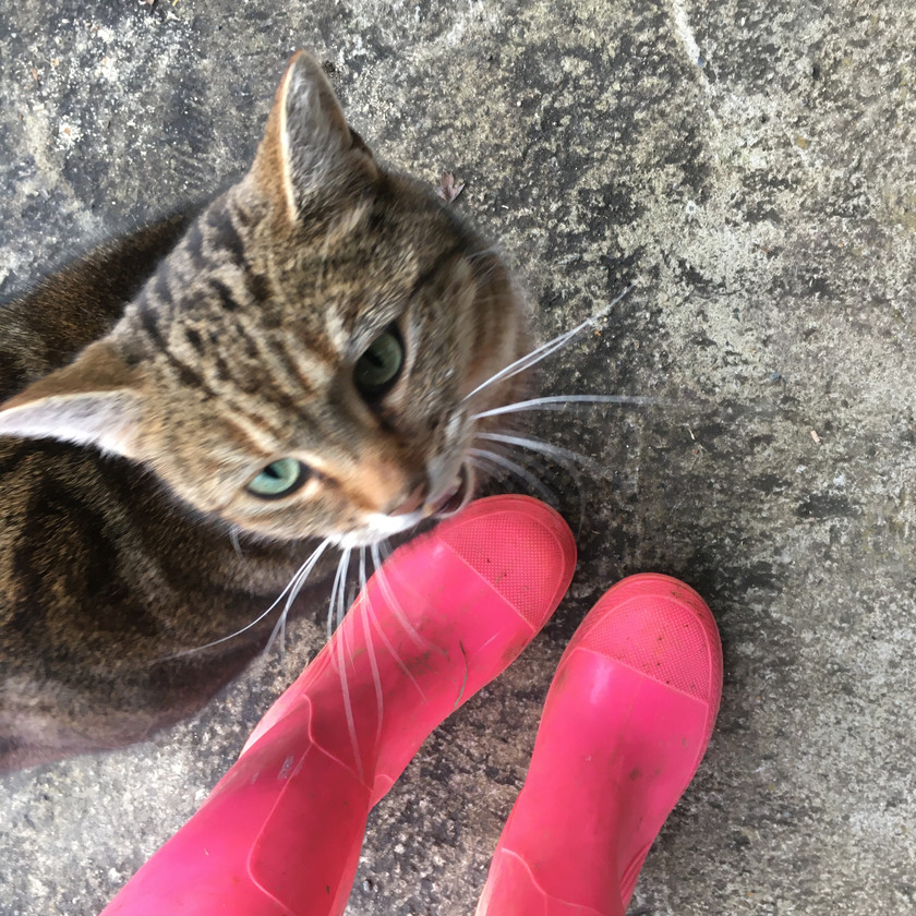 Emma Jane Floral Design wears pink wellies with cat