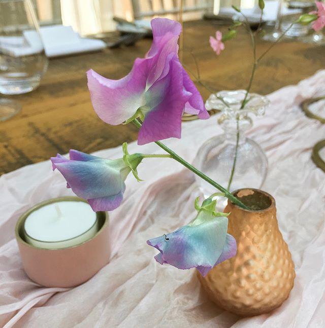 A single purple blue sweet pea bloom in a copper gold vase emma jane floral design