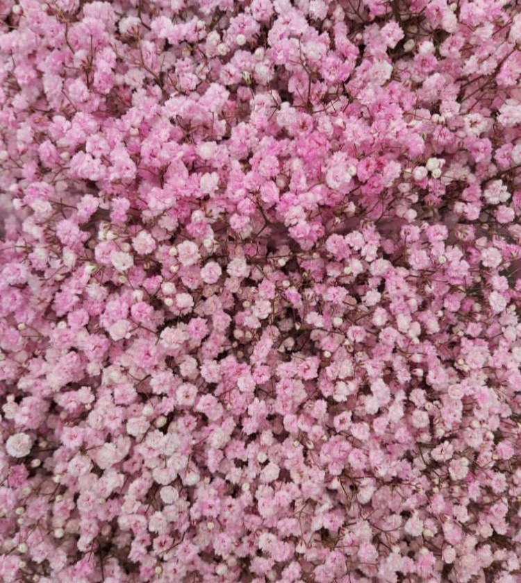 Pink gypsophilia used in a floral foam free flower arrangement and floral installation by emma jane floral design.