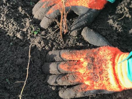 De eerste Plantdagen op Schevichoven!