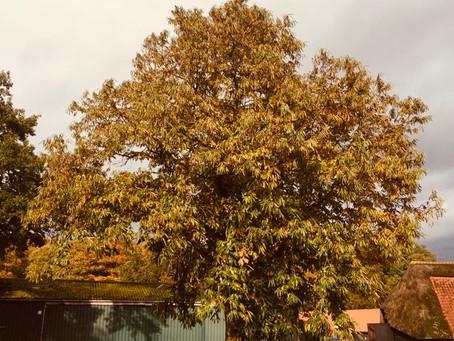 4500 nieuwe kastanjebomen