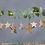 Thumbnail: Decorazione in legno stella piccola (set di 4)
