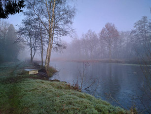 The pond in the morning