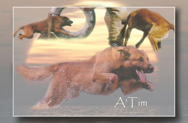 A'TIM