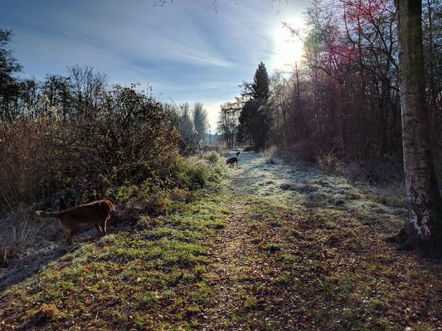 Dogs strolling in the autumn garden