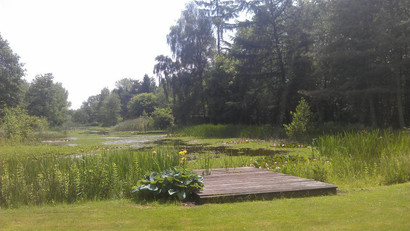 The pond in the summer