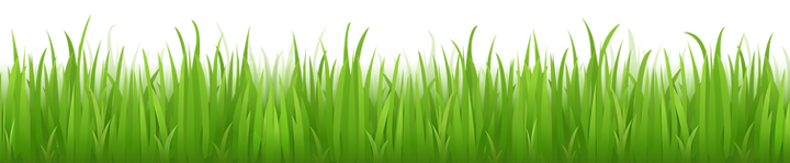 grass_PNG401.png