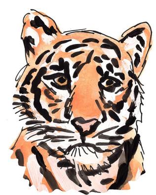 Tiger head.jpg