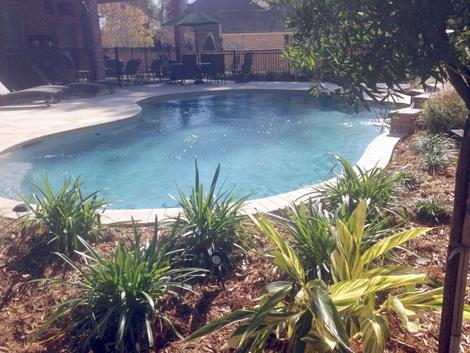 Simple Freeform Backyard Pool.webp