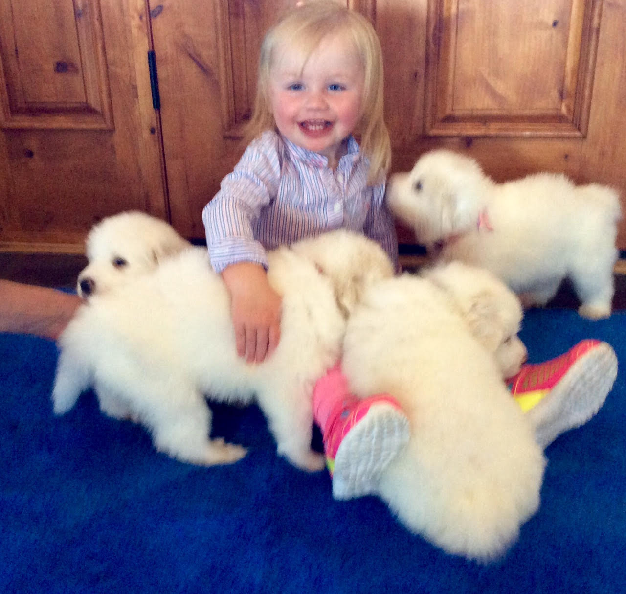 Grace and puppies